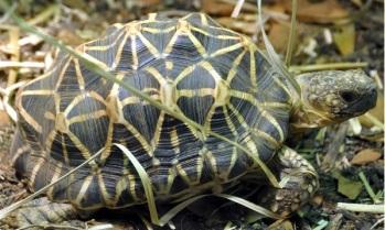 Chinnar Wildlife Sanctuary star tortoises – IAS Current Affairs