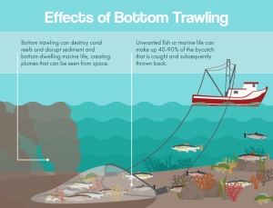 effects-of-bottom-trawling